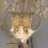 http://mczbase.mcz.harvard.edu/specimen_images/entomology/large/MCZ-ENT00027010_Renocera_johnsoni_hef.jpg