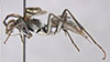 http://mczbase.mcz.harvard.edu/specimen_images/entomology/large/MCZ-ENT00027223_Priochilus_fraternus_hal.jpg