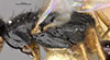 http://mczbase.mcz.harvard.edu/specimen_images/entomology/large/MCZ-ENT00028163_Laelius_fumipennis_thl.jpg