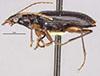 http://mczbase.mcz.harvard.edu/specimen_images/entomology/large/MCZ-ENT00028605_Notagonum_altum_hal.jpg