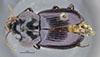 http://mczbase.mcz.harvard.edu/specimen_images/entomology/large/MCZ-ENT00028683_Fortagonum_limum_had.jpg