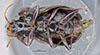 http://mczbase.mcz.harvard.edu/specimen_images/entomology/large/MCZ-ENT00028683_Fortagonum_limum_hav.jpg