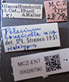 http://mczbase.mcz.harvard.edu/specimen_images/entomology/large/MCZ-ENT00028790_Pelecium_longicolle_lbs.jpg
