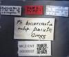 Media of type image, MCZ:Ent:30037 Identified as Pheidole paiute type status Paratype of Pheidole bicarinata paiute. . Aspect: labels