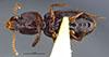 http://mczbase.mcz.harvard.edu/specimen_images/entomology/large/MCZ-ENT00030162_Clivina_tripuncta_hav.jpg