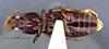 http://mczbase.mcz.harvard.edu/specimen_images/entomology/large/MCZ-ENT00030168_Clivina_inopaca_hav.jpg