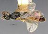 http://mczbase.mcz.harvard.edu/specimen_images/entomology/large/MCZ-ENT00030280_Pseudisobrachium_arenarium_had.jpg