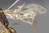 http://mczbase.mcz.harvard.edu/specimen_images/entomology/large/MCZ-ENT00030287_Pseudisobrachium_comanche_win.jpg