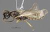 http://mczbase.mcz.harvard.edu/specimen_images/entomology/large/MCZ-ENT00030288_Pseudisobrachium_apache_had.jpg