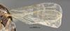http://mczbase.mcz.harvard.edu/specimen_images/entomology/large/MCZ-ENT00030289_Pseudisobrachium_foutsi_fwg.jpg