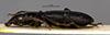 http://mczbase.mcz.harvard.edu/specimen_images/entomology/large/MCZ-ENT00030692_Penetretus_sterbae_hal.jpg