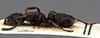 http://mczbase.mcz.harvard.edu/specimen_images/entomology/large/MCZ-ENT00030712_Bothroponera_lamottei_hal.jpg
