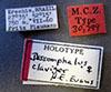 http://mczbase.mcz.harvard.edu/specimen_images/entomology/large/MCZ-ENT00030799_Dissomphalus_claviger_lbs.jpg
