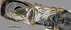 http://mczbase.mcz.harvard.edu/specimen_images/entomology/large/MCZ-ENT00030804_Bakeriella_azteca_fwg.jpg