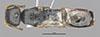http://mczbase.mcz.harvard.edu/specimen_images/entomology/large/MCZ-ENT00030804_Bakeriella_azteca_had.jpg