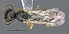 http://mczbase.mcz.harvard.edu/specimen_images/entomology/large/MCZ-ENT00030807_Bakeriella_floridana_had.jpg