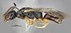 http://mczbase.mcz.harvard.edu/specimen_images/entomology/large/MCZ-ENT00030807_Bakeriella_floridana_hal.jpg