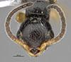 http://mczbase.mcz.harvard.edu/specimen_images/entomology/large/MCZ-ENT00030807_Bakeriella_floridana_hef.jpg
