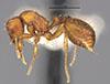 http://mczbase.mcz.harvard.edu/specimen_images/entomology/large/MCZ-ENT00030879_Octostruma_inca_hal.jpg