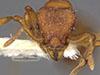 http://mczbase.mcz.harvard.edu/specimen_images/entomology/large/MCZ-ENT00030879_Octostruma_inca_hef.jpg