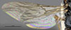 http://mczbase.mcz.harvard.edu/specimen_images/entomology/large/MCZ-ENT00030940_Trichotepyris_apache_win.jpg