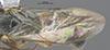 http://mczbase.mcz.harvard.edu/specimen_images/entomology/large/MCZ-ENT00030944_Rhabdepyris_lupus_fwg.jpg