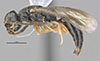 http://mczbase.mcz.harvard.edu/specimen_images/entomology/large/MCZ-ENT00030944_Rhabdepyris_lupus_hal.jpg