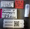 http://mczbase.mcz.harvard.edu/specimen_images/entomology/large/MCZ-ENT00030944_Rhabdepyris_lupus_lbs.jpg