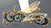 http://mczbase.mcz.harvard.edu/specimen_images/entomology/large/MCZ-ENT00030945_Rhabdepyris_carolinianus_had.jpg