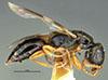 http://mczbase.mcz.harvard.edu/specimen_images/entomology/large/MCZ-ENT00030949_Rhabdepyris_iridescens_hal.jpg