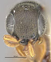 http://mczbase.mcz.harvard.edu/specimen_images/entomology/large/MCZ-ENT00030949_Rhabdepyris_iridescens_hef.jpg