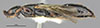 http://mczbase.mcz.harvard.edu/specimen_images/entomology/large/MCZ-ENT00030951_Rhabdepyris_luteipennis_hal.jpg