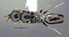 http://mczbase.mcz.harvard.edu/specimen_images/entomology/large/MCZ-ENT00030953_Rhabdepyris_vesculus_had.jpg