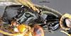 http://mczbase.mcz.harvard.edu/specimen_images/entomology/large/MCZ-ENT00030954_Rhabdepyris_virescens_thl.jpg