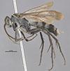 http://mczbase.mcz.harvard.edu/specimen_images/entomology/large/MCZ-ENT00030969_Anoplius_chiriqui_hal.jpg