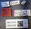 http://mczbase.mcz.harvard.edu/specimen_images/entomology/large/MCZ-ENT00031206_Anisepyris_immarginatus_lbs.jpg