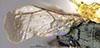 http://mczbase.mcz.harvard.edu/specimen_images/entomology/large/MCZ-ENT00031212_Anisepyris_anduzei_fwg.jpg