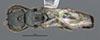http://mczbase.mcz.harvard.edu/specimen_images/entomology/large/MCZ-ENT00031215_Anisepyris_colimae_had.jpg
