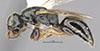 http://mczbase.mcz.harvard.edu/specimen_images/entomology/large/MCZ-ENT00031224_Anisepyris_nigripes_hal.jpg
