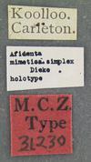 http://mczbase.mcz.harvard.edu/specimen_images/entomology/large/MCZ-ENT00031230_Afidenta_mimetica_simplex_lbs.jpg
