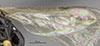 http://mczbase.mcz.harvard.edu/specimen_images/entomology/large/MCZ-ENT00031244_Pseudisobrachium_porteri_hwg.jpg