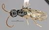 http://mczbase.mcz.harvard.edu/specimen_images/entomology/large/MCZ-ENT00031245_Pseudisobrachium_steinbachi_had.jpg