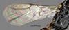 http://mczbase.mcz.harvard.edu/specimen_images/entomology/large/MCZ-ENT00031254_Epyris_crassipes_fwg.jpg