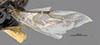 http://mczbase.mcz.harvard.edu/specimen_images/entomology/large/MCZ-ENT00031620_Epyris_cochise_fwg.jpg