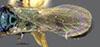 http://mczbase.mcz.harvard.edu/specimen_images/entomology/large/MCZ-ENT00031742_Rhabdepyris_versicolor_fwg.jpg