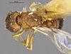 http://mczbase.mcz.harvard.edu/specimen_images/entomology/large/MCZ-ENT00031897_Xiphomyrmex_papyri_had.jpg