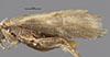 http://mczbase.mcz.harvard.edu/specimen_images/entomology/large/MCZ-ENT00032109_Atopsyche_cubana_fwg.jpg