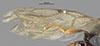 http://mczbase.mcz.harvard.edu/specimen_images/entomology/large/MCZ-ENT00032748_Bakeriella_quadriceps_fwg.jpg