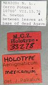 http://mczbase.mcz.harvard.edu/specimen_images/entomology/large/MCZ-ENT00033278_Aenigmaticum_mexicanum_lbs.jpg