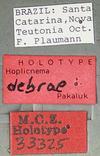 http://mczbase.mcz.harvard.edu/specimen_images/entomology/large/MCZ-ENT00033325_Hoplicnema_debrae_lbs.jpg